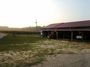 Blueberry Orchard with barn for sale