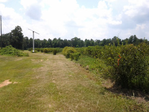 Blueberry Orchard for sale
