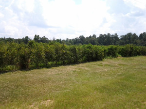Berry Orchard for sale
