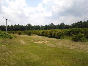 Blueberry Farm for sale