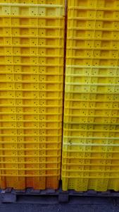 30lb discolored-3 400x600